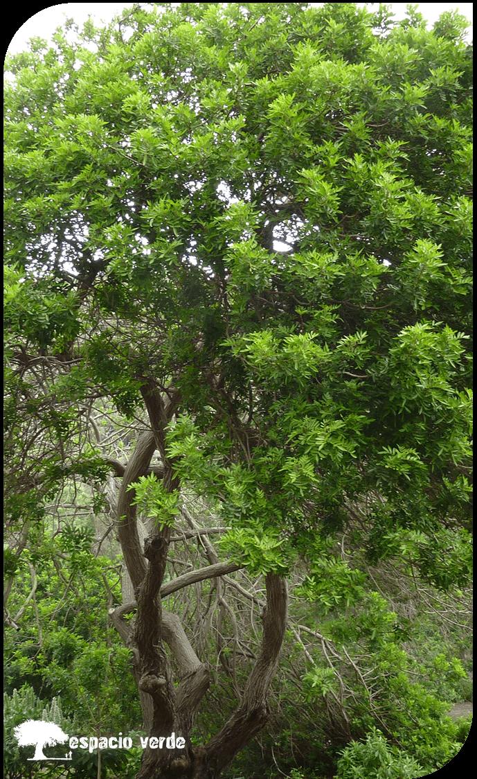Arboricultura 02